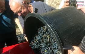 Le vin rouge breton, c'est pour bientôt