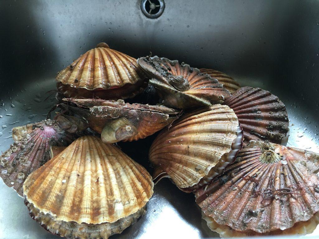 Bretagne : une écloserie d'huîtres diversifiées innovante