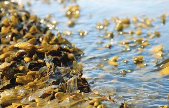 La Bretagne : une référence en matière d'ingrédients marins pour la cosmétique