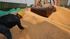 Importations de soja : la Bretagne a déjà entamé la transition