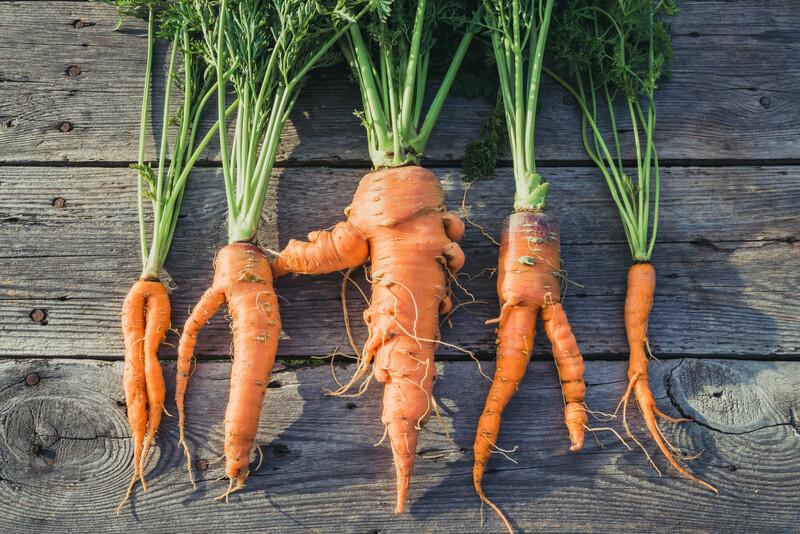 Foodologic : la start-up qui s'attaque au gaspillage alimentaire