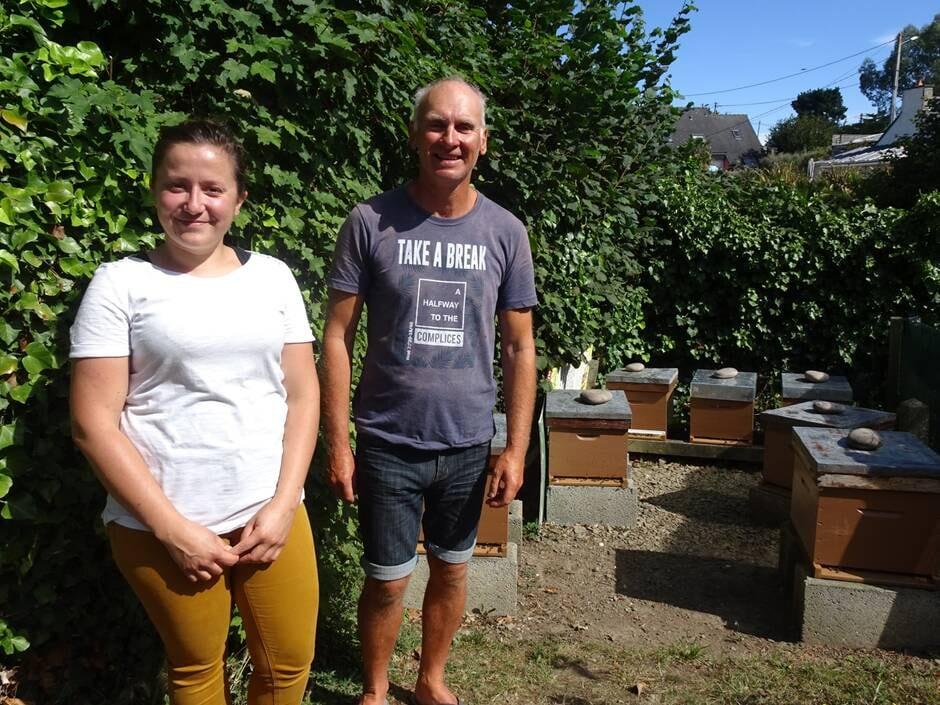 Avec l'aide des abeilles, le sarrasin fait son retour en Bretagne