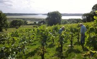 Le réchauffement climatique va créer des conditions « bien plus favorables » pour le vin en Bretagne