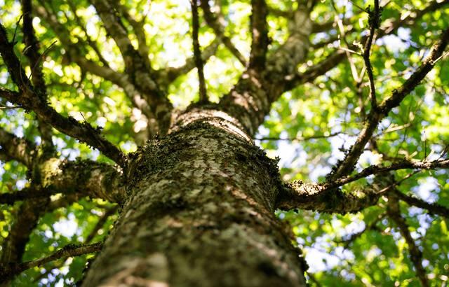A l'abandon, la forêt de Ploërdut va renaître avec la plantation de 60.000 arbres