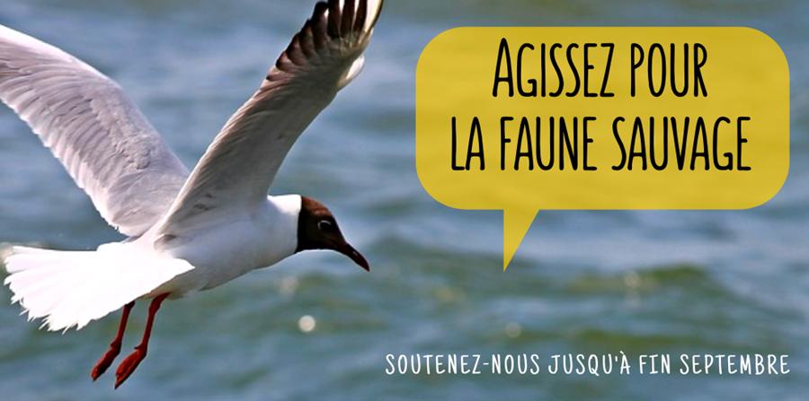 Participez à l'émergence du nouveau centre de soins faune sauvage breton